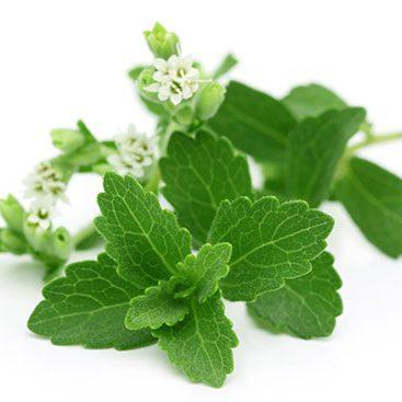 stevia_leafandflower